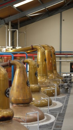 Still Room 2 at Glenfiddich. Wash stills (at the far end) are often taller, but not always